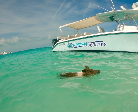 SWIM WITH PIGS NASSAU TO EXUMA BAHAMAS TOUR | From East to